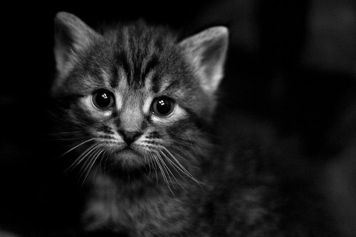 Black Cat Apprentissage Anglais