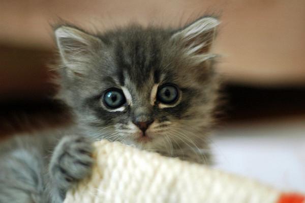 Comme je vois que vous avez le cerveau qui commence à fumer, voici une photo de chaton. Respirez un bon coup avant de reprendre votre lecture.