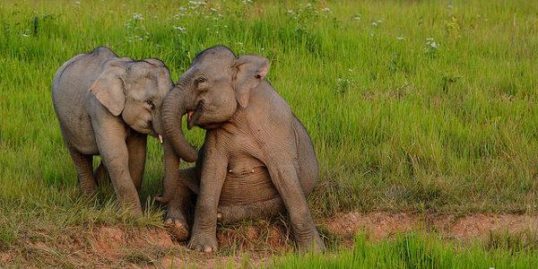 Une mémoire d'éléphant