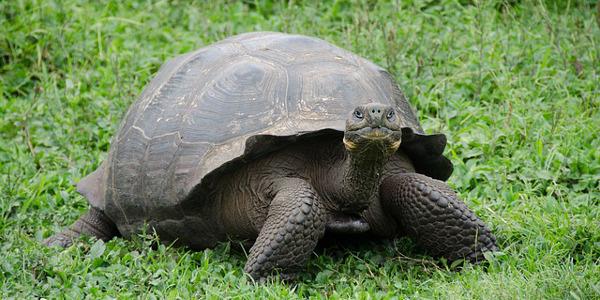 Lièvre ou tortue ?